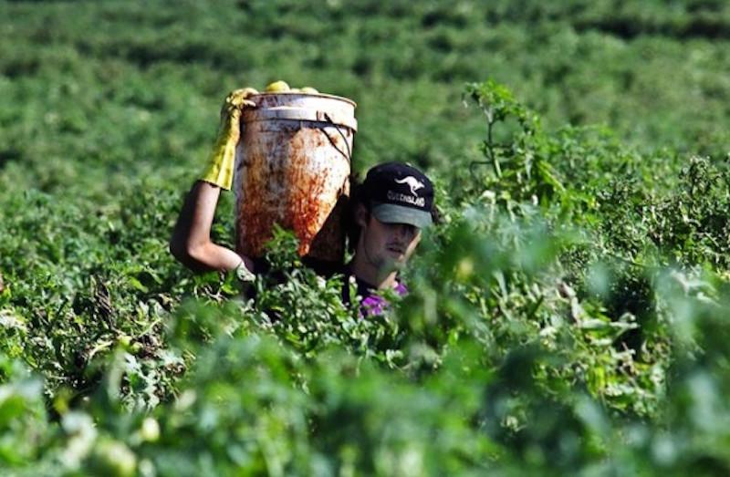 Kết quả hình ảnh cho farm in australia jobs