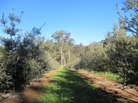 Truffle farm in Robertson, NSW